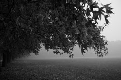 Autunno in B&W